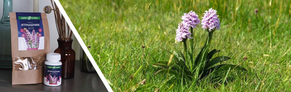 трава ятрышник в капсулах